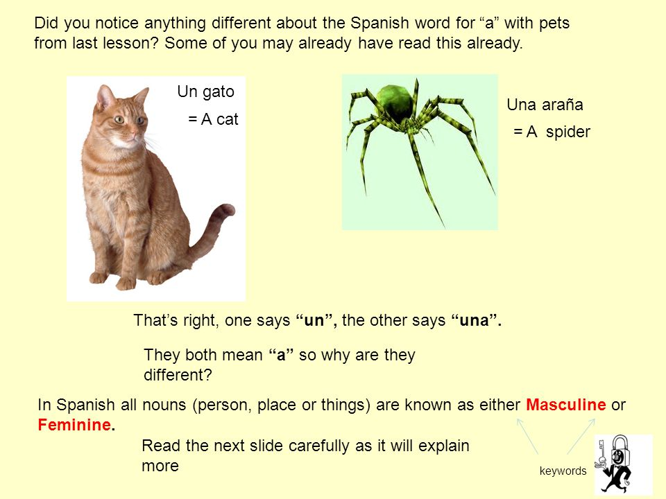 Un gato Una araña = A cat = A spider Did you notice anything different about the Spanish word for a with pets from last lesson.