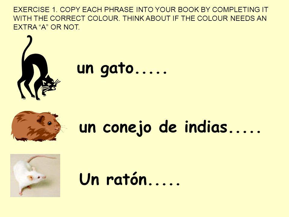 un conejo de indias..... un gato..... Un ratón..... EXERCISE 1. COPY EACH PHRASE INTO YOUR BOOK BY COMPLETING IT WITH THE CORRECT COLOUR. THINK ABOUT