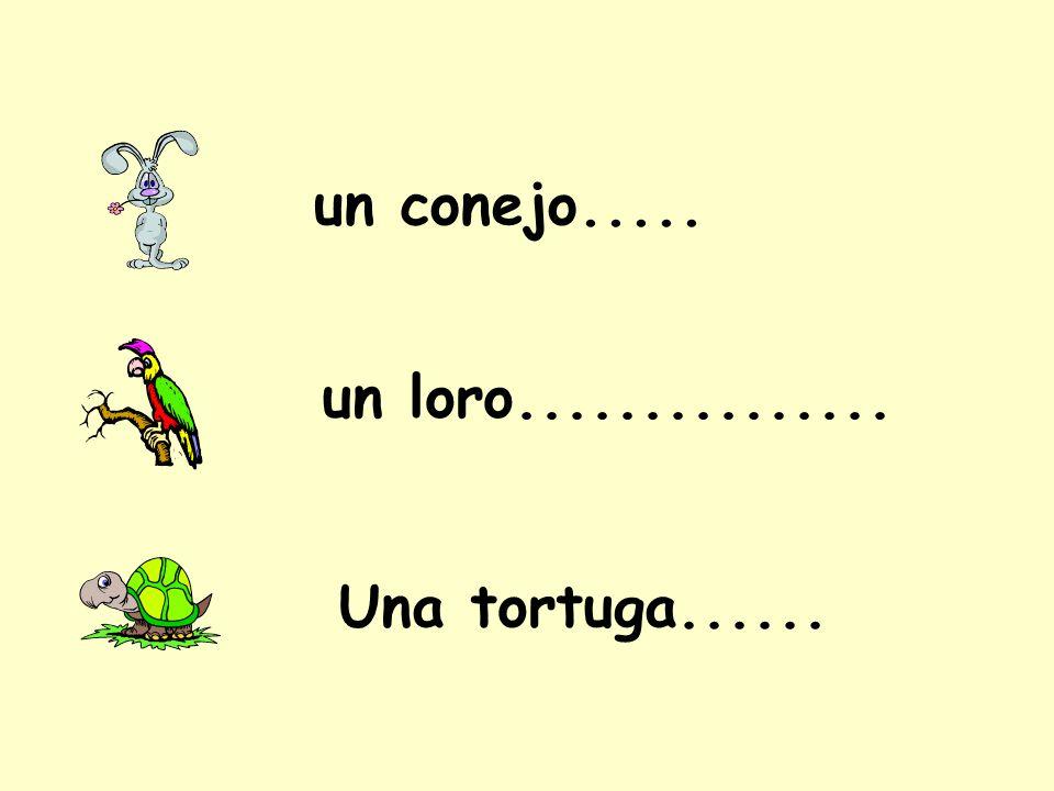 un conejo..... un loro............... Una tortuga......