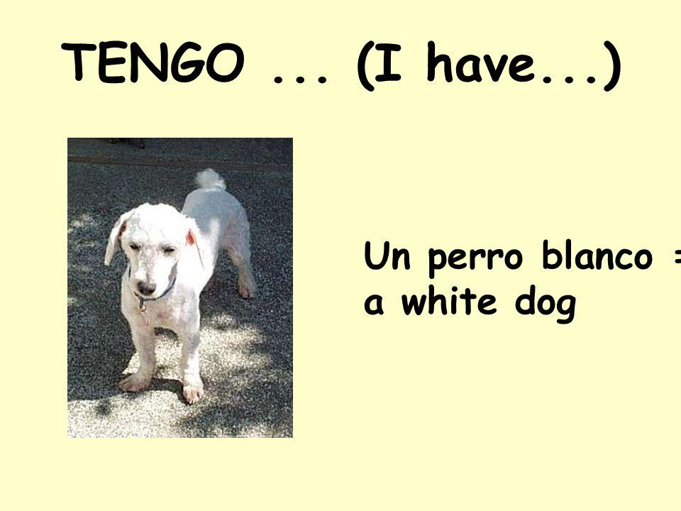 TENGO... (I have...) Un perro blanco = a white dog