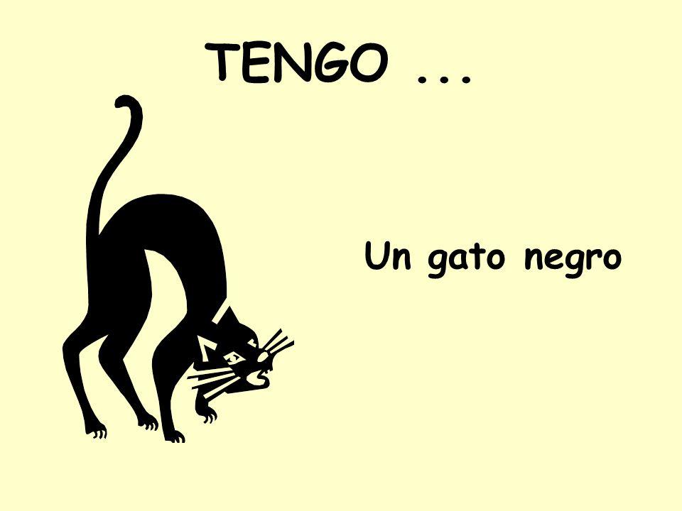 TENGO... Un gato negro
