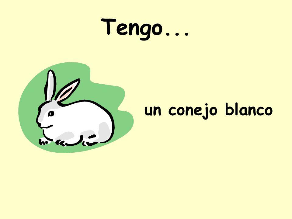 Tengo... un conejo blanco