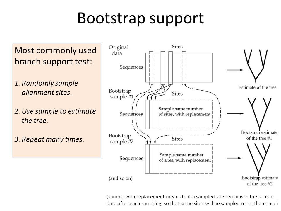 Most commonly used branch support test: 1.Randomly sample alignment sites.