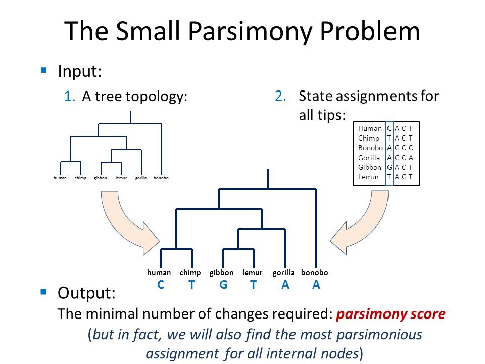  Input: 1.A tree topology: The Small Parsimony Problem humanchimpgorillalemurgibbonbonobo HumanCACT ChimpTACT BonoboAGCC GorillaAGCA GibbonGACT LemurTAG T  Output: The minimal number of changes required: parsimony score 2.State assignments for all tips: humanchimpgorillalemurgibbonbonobo CTGTAA (but in fact, we will also find the most parsimonious assignment for all internal nodes)