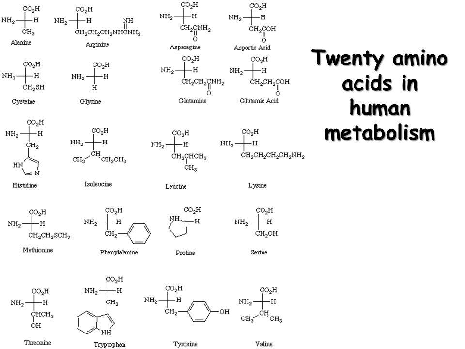 Twenty amino acids in human metabolism