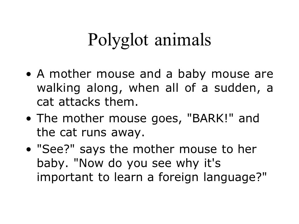 Polyglot animals A mother mouse and a baby mouse are walking along, when all of a sudden, a cat attacks them.