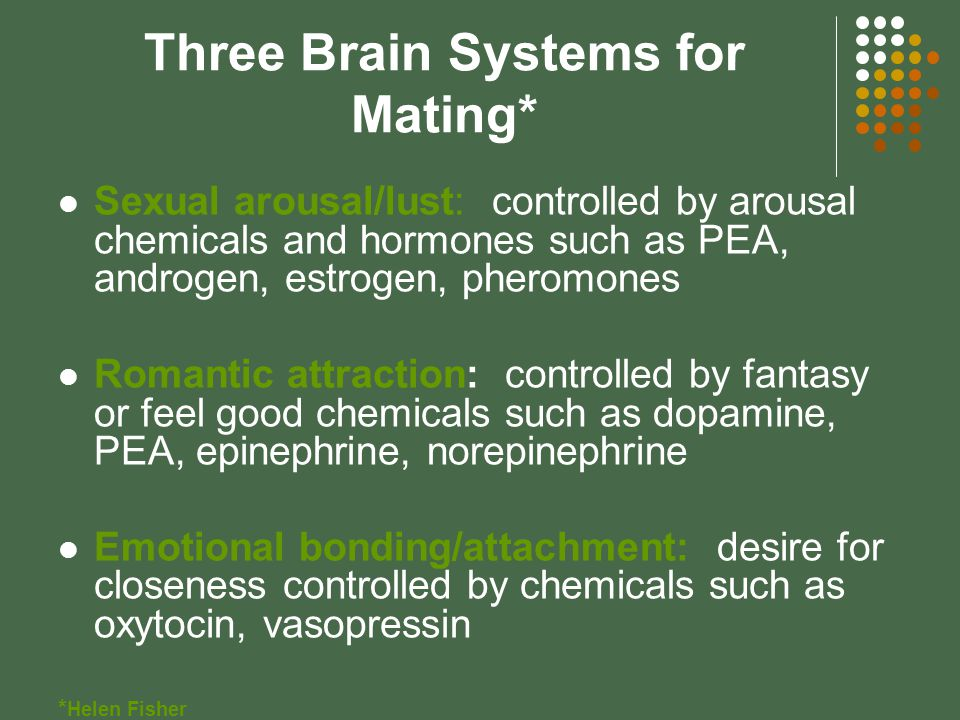 Three Brain Systems for Mating* Sexual arousal/lust: controlled by arousal chemicals and hormones such as PEA, androgen, estrogen, pheromones Romantic attraction: controlled by fantasy or feel good chemicals such as dopamine, PEA, epinephrine, norepinephrine Emotional bonding/attachment: desire for closeness controlled by chemicals such as oxytocin, vasopressin * Helen Fisher