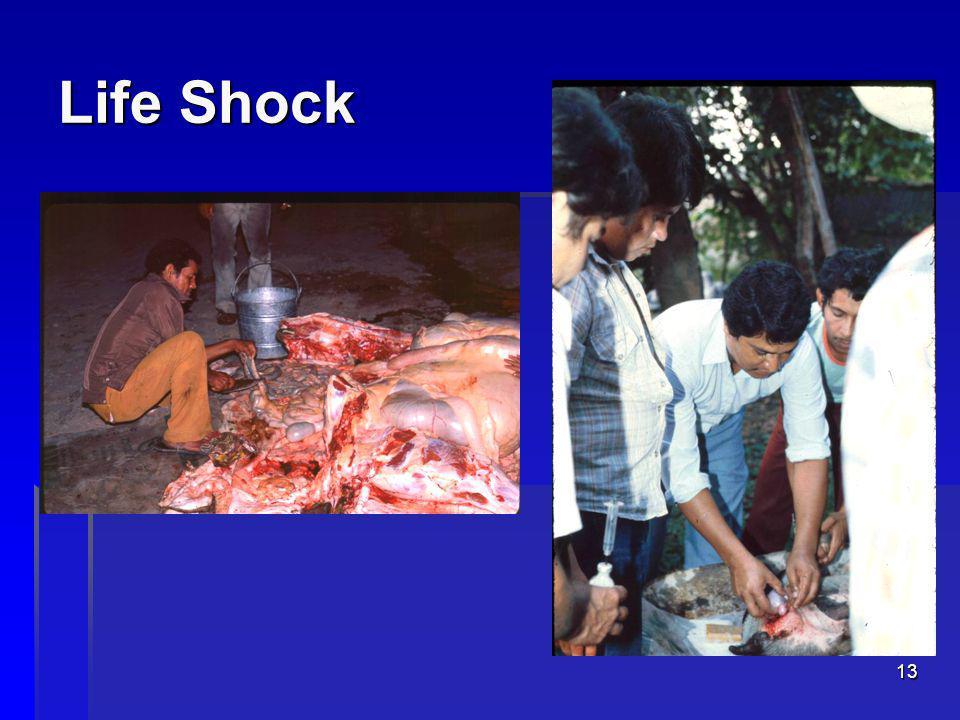 13 Life Shock