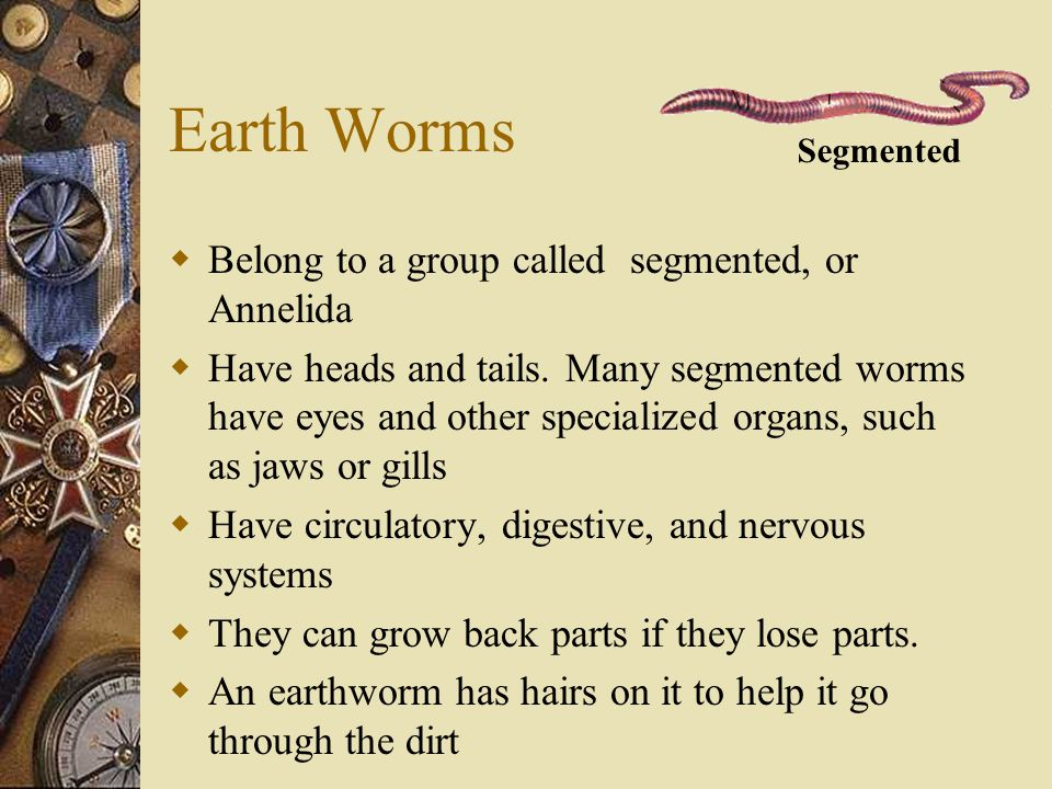 Earth Worms  Belong to a group called segmented, or Annelida  Have heads and tails. Many segmented worms have eyes and other specialized organs, suc