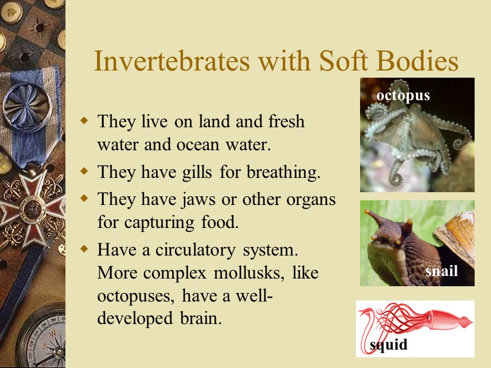 Invertebrates with Soft Bodies  They live on land and fresh water and ocean water.  They have gills for breathing.  They have jaws or other organs