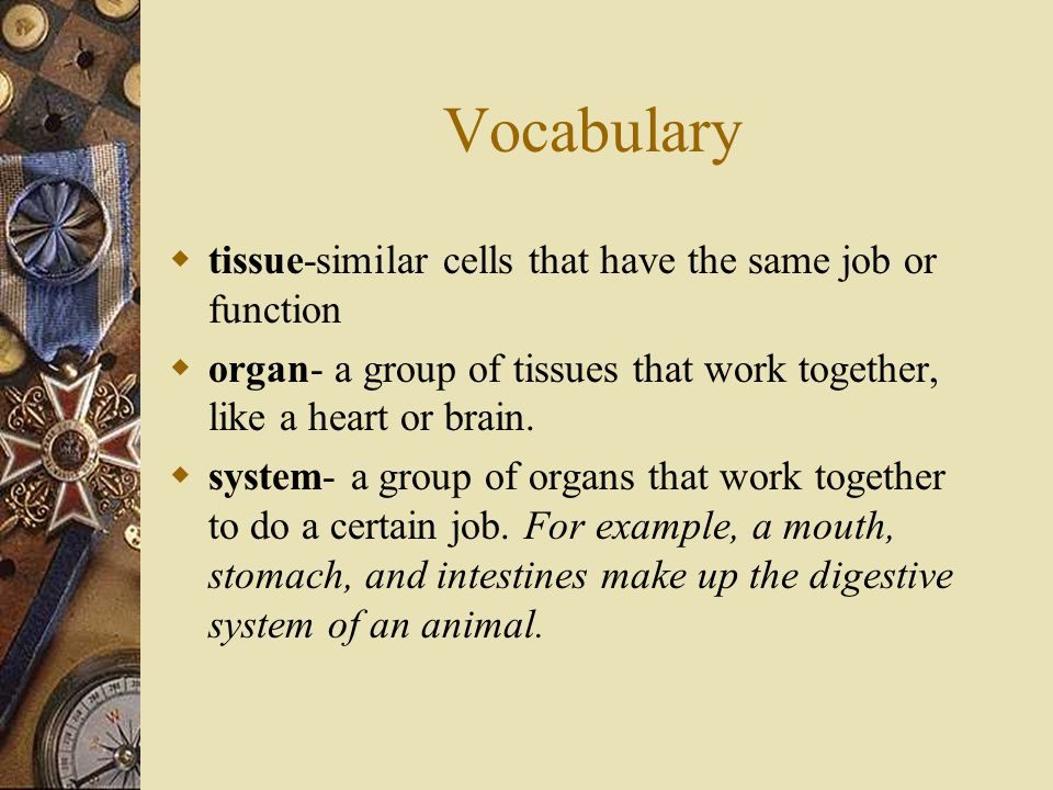 Vocabulary  tissue-similar cells that have the same job or function  organ- a group of tissues that work together, like a heart or brain.  system-