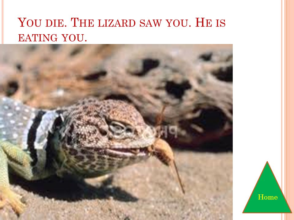 You have chosen to sneak up on the lizard and jog. Next
