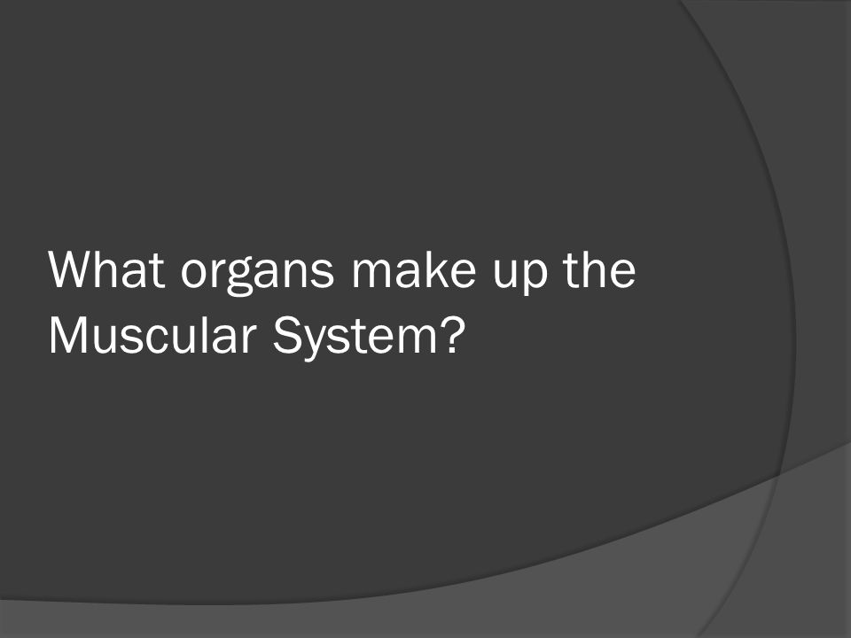 What organs make up the Muscular System?