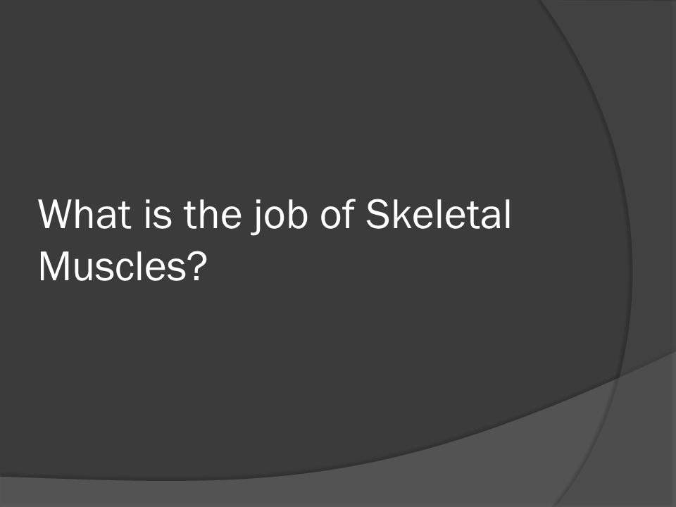 What is the job of Skeletal Muscles?