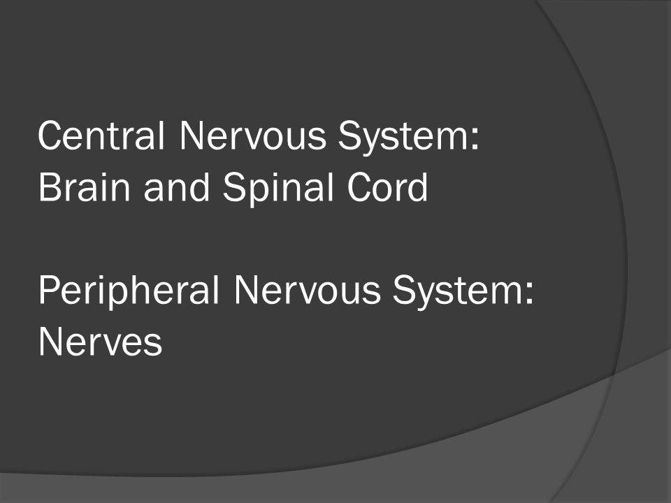 What is the job of the Nervous System?