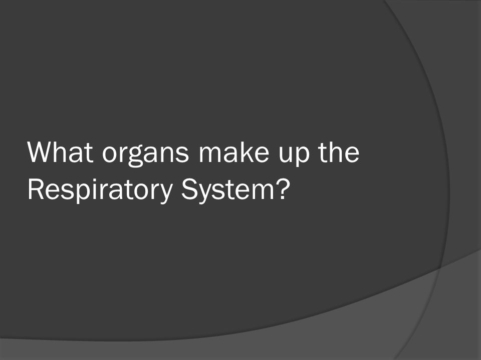 What organs make up the Respiratory System?