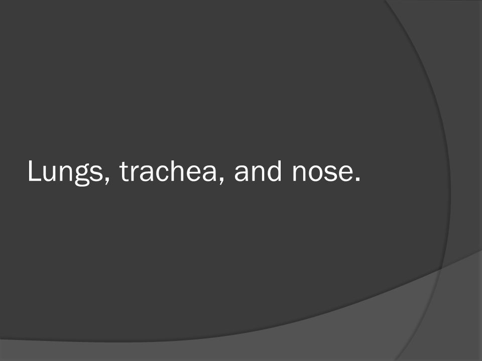 Lungs, trachea, and nose.