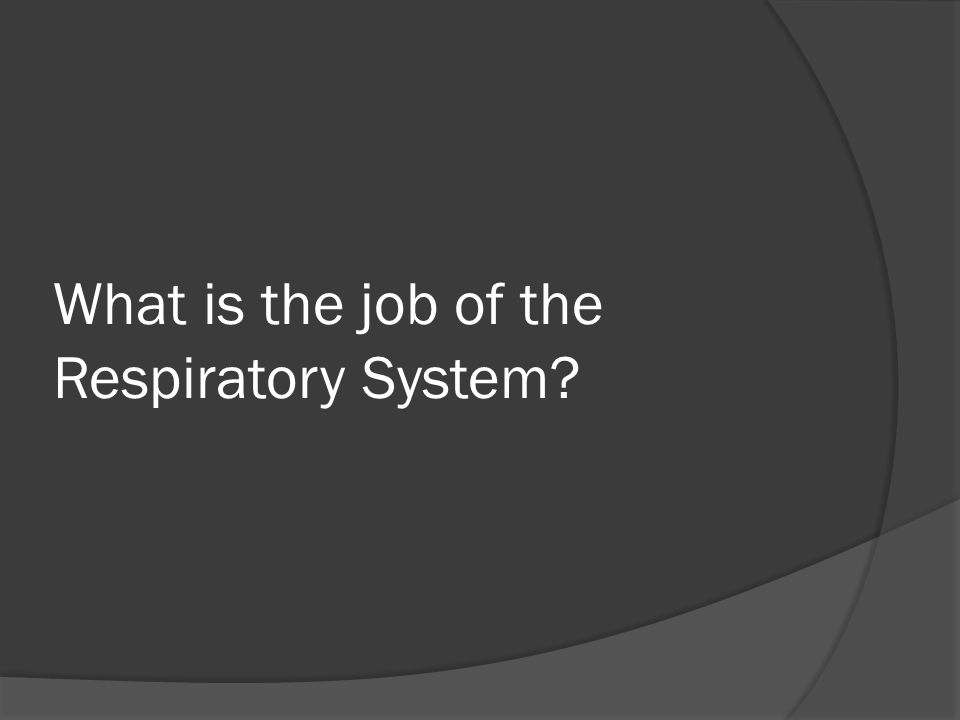 What is the job of the Respiratory System?