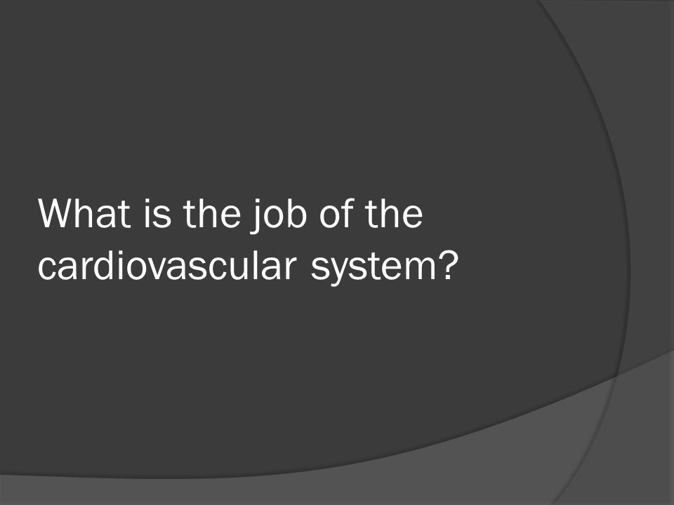 What is the job of the cardiovascular system?