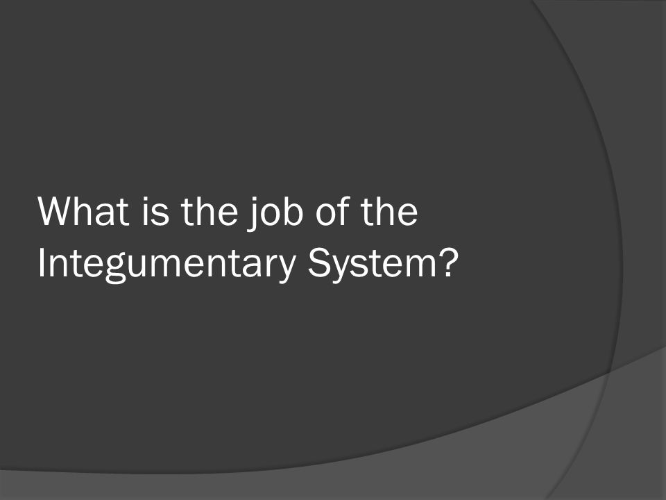What is the job of the Integumentary System?