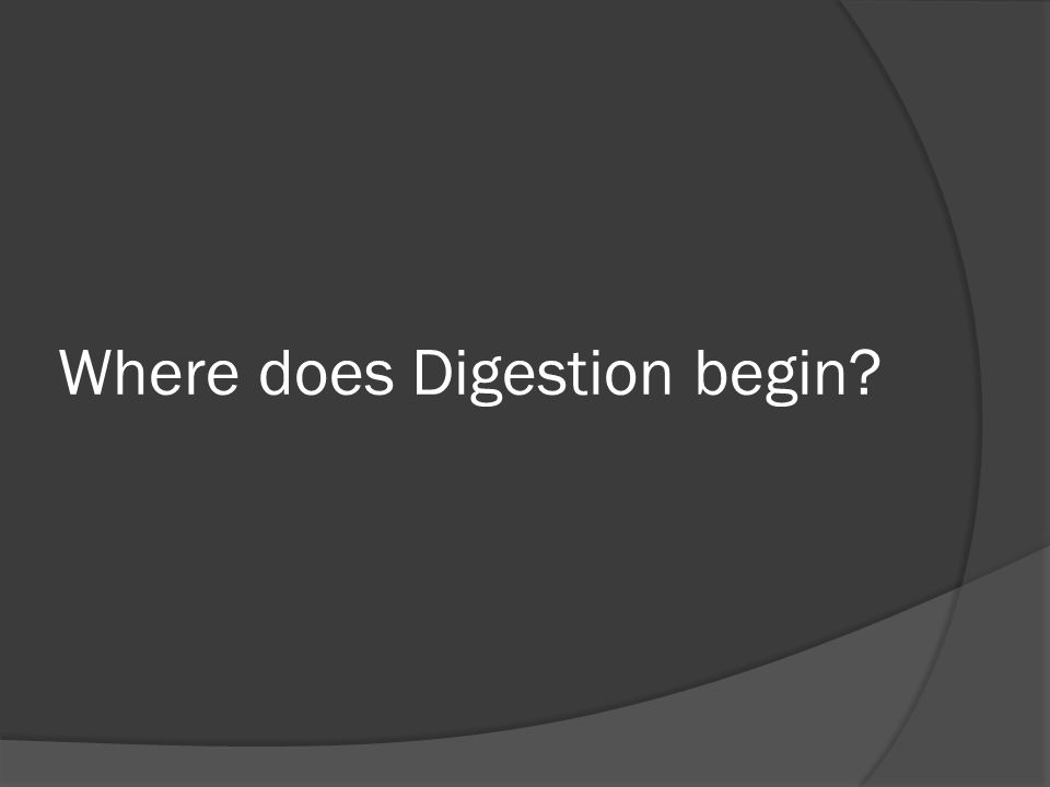 Where does Digestion begin?