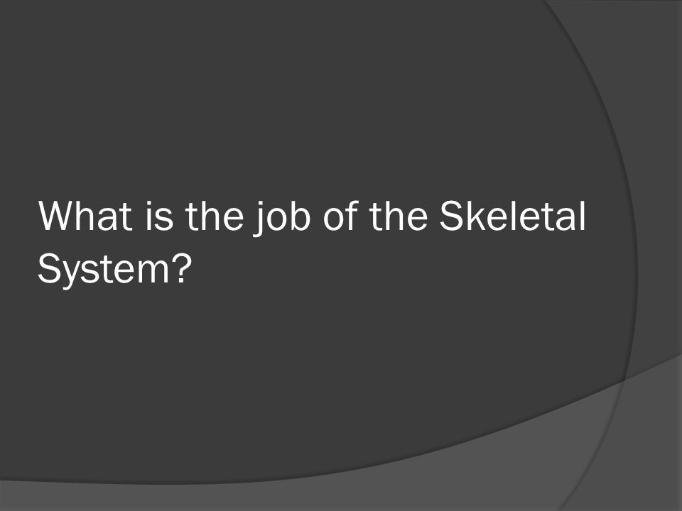 What is the job of the Skeletal System?