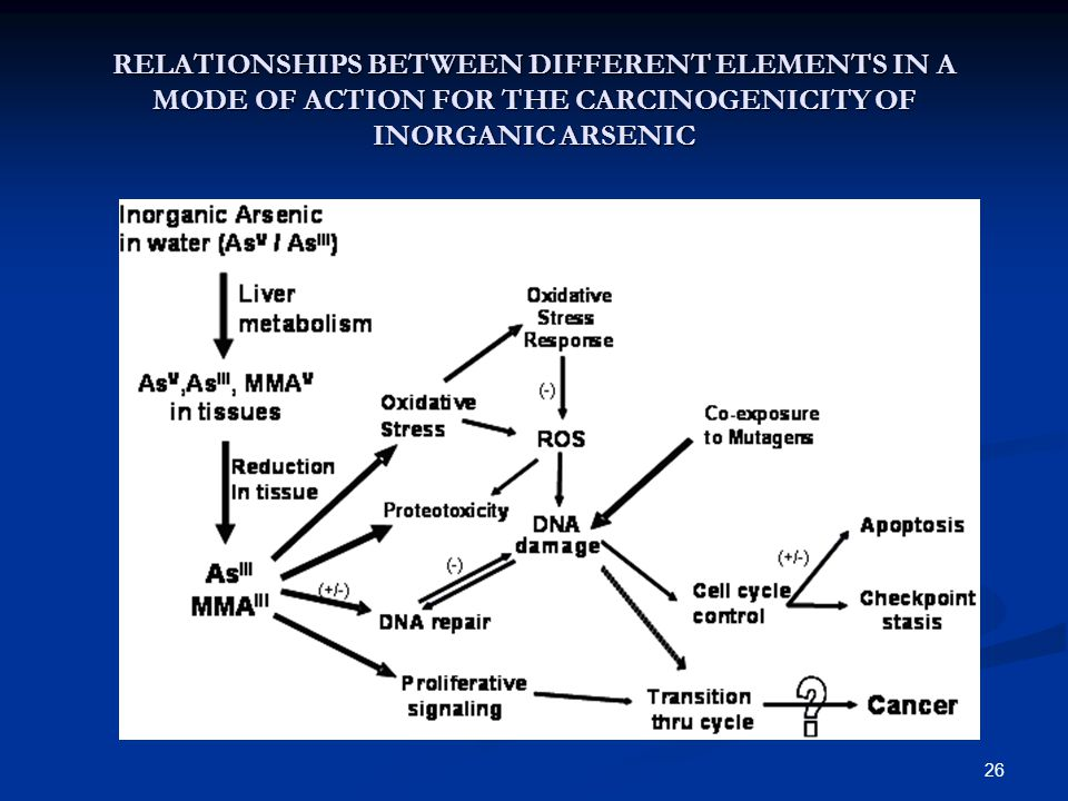 26 RELATIONSHIPS BETWEEN DIFFERENT ELEMENTS IN A MODE OF ACTION FOR THE CARCINOGENICITY OF INORGANIC ARSENIC