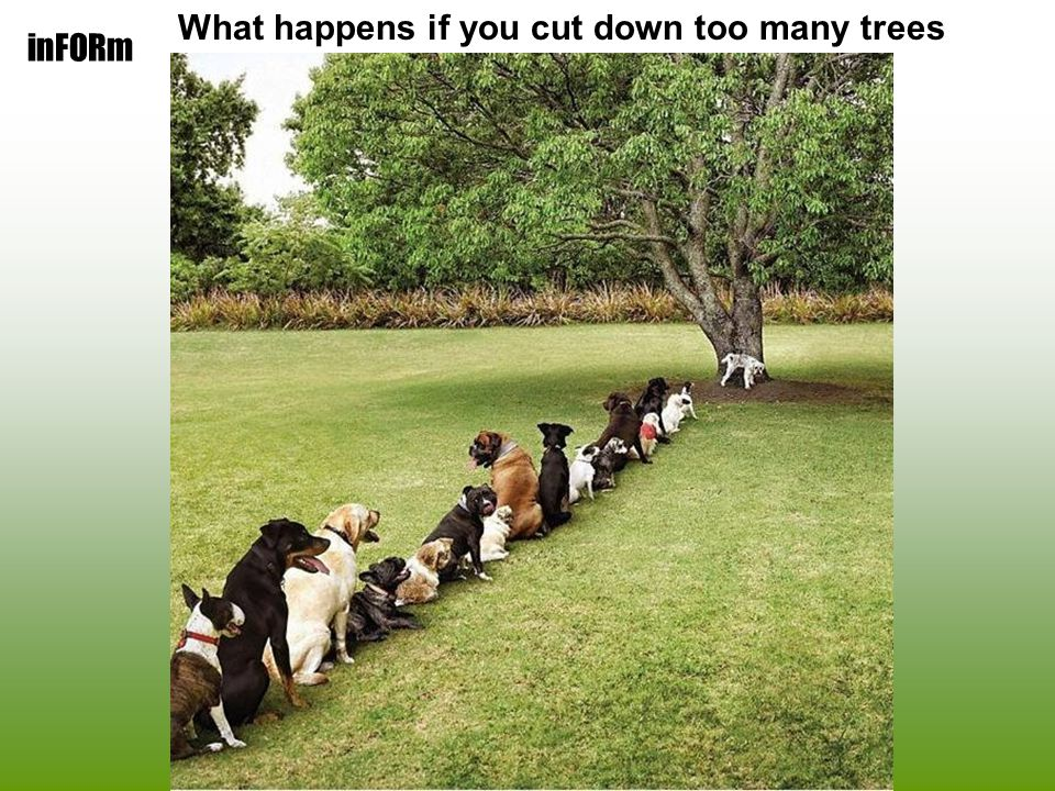 inFORm What happens if you cut down too many trees