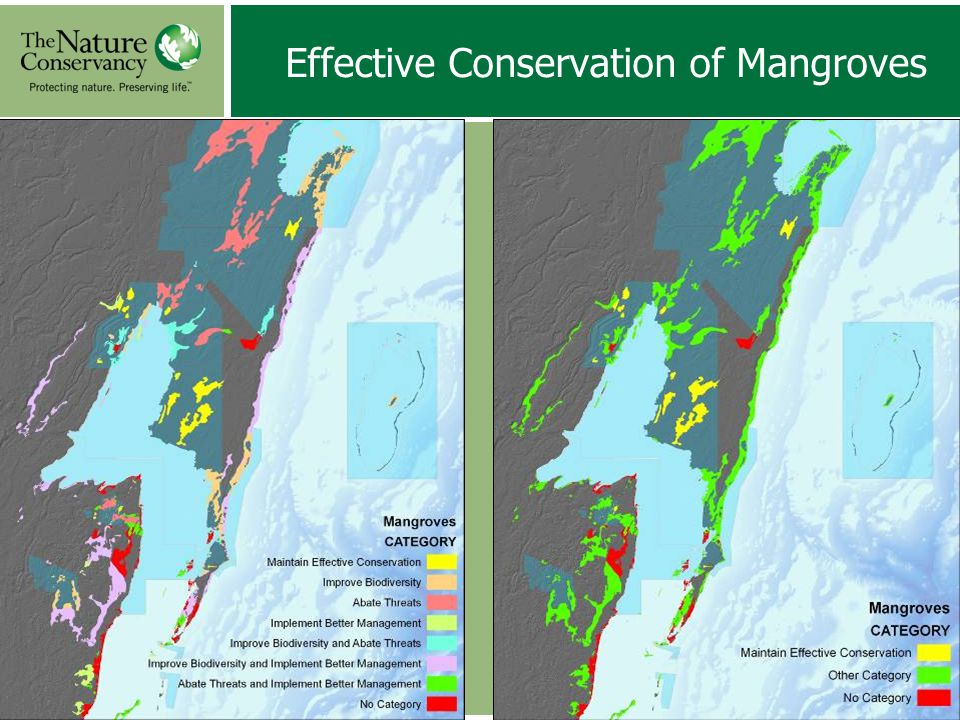 Effective Conservation of Mangroves