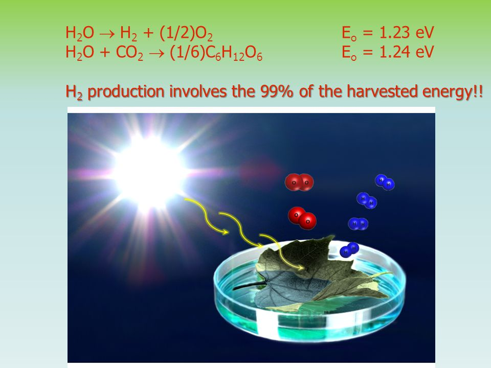 H 2 O  H 2 + (1/2)O 2 E o = 1.23 eV H 2 O + CO 2  (1/6)C 6 H 12 O 6 E o = 1.24 eV H 2 production involves the 99% of the harvested energy!!