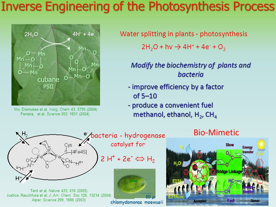 Inverse Engineering of the Photosynthesis Process Mn Mn Mn Mn O O O O O O Mn Mn Mn Mn O O O O 2H 2 O 4H + + 4e - cubanePSII Water splitting in plants