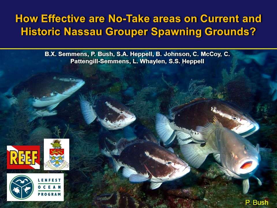 How Effective are No-Take areas on Current and Historic Nassau Grouper Spawning Grounds? P. Bush B.X. Semmens, P. Bush, S.A. Heppell, B. Johnson, C. M