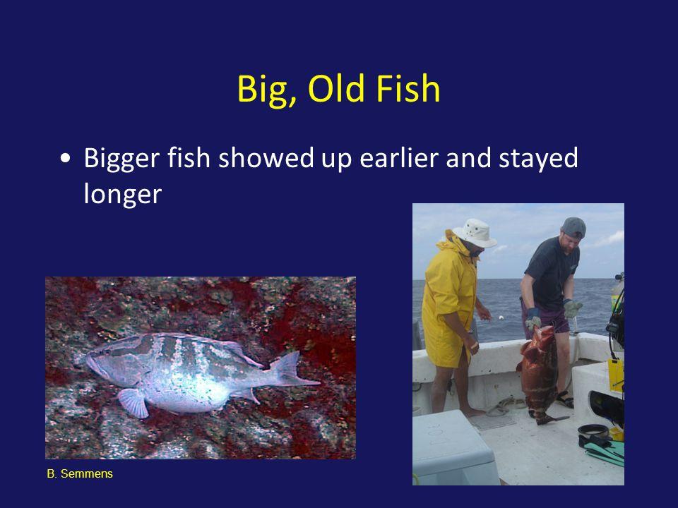 Big, Old Fish Bigger fish showed up earlier and stayed longer B. Semmens