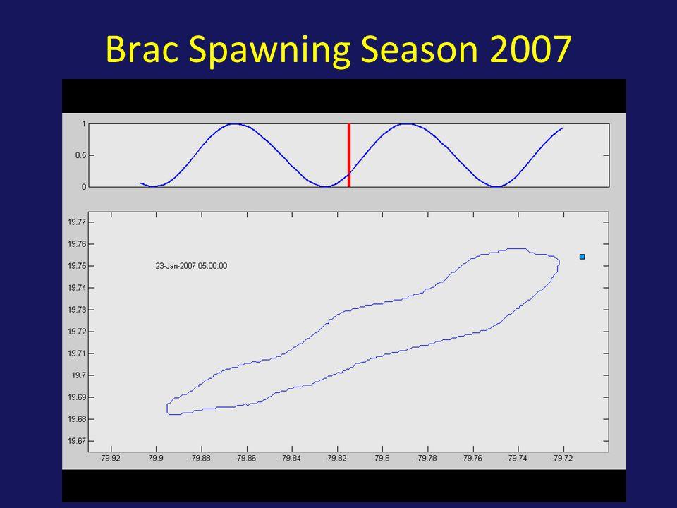 Brac Spawning Season 2007