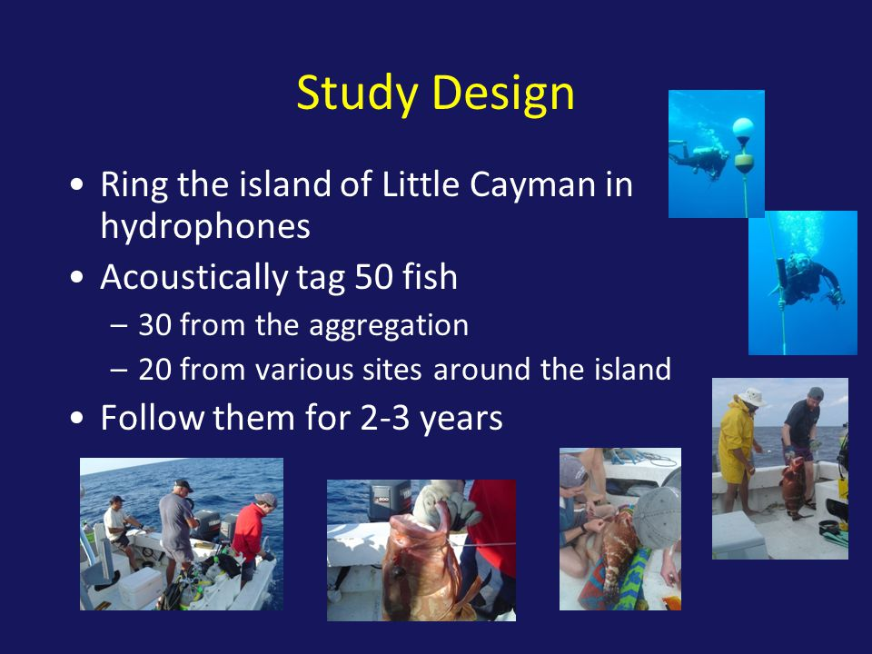 Study Design Ring the island of Little Cayman in hydrophones Acoustically tag 50 fish –30 from the aggregation –20 from various sites around the island Follow them for 2-3 years