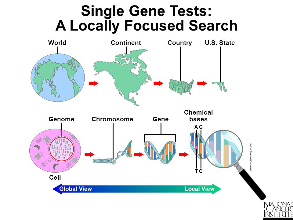 Genome-Wide Profiling: A Globally Focused Search Chromosome ContinentCountryU.S.