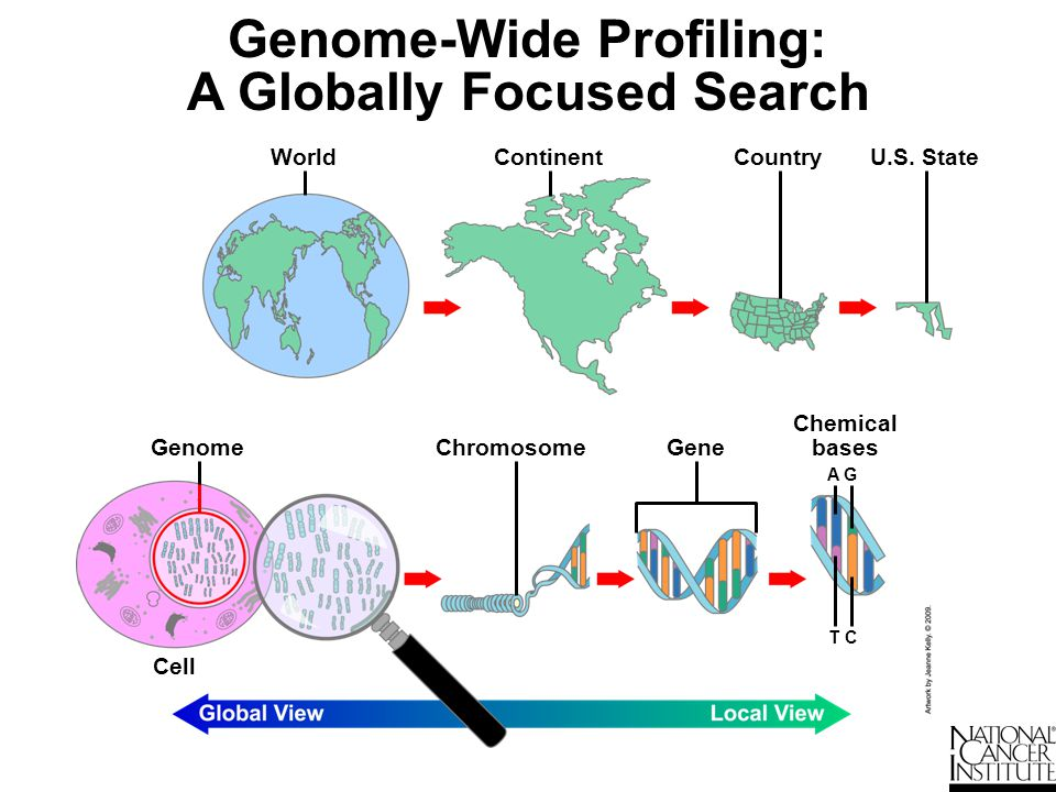 Can Genome-Wide Profiles Inform Cancer Prognosis.