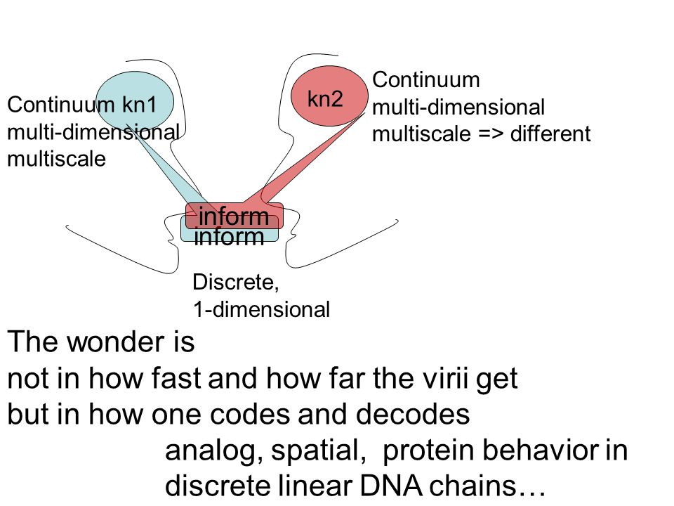 Continuum kn1 multi-dimensional multiscale inform kn2 inform Discrete, 1-dimensional Continuum multi-dimensional multiscale => different The wonder is not in how fast and how far the virii get but in how one codes and decodes analog, spatial, protein behavior in discrete linear DNA chains…
