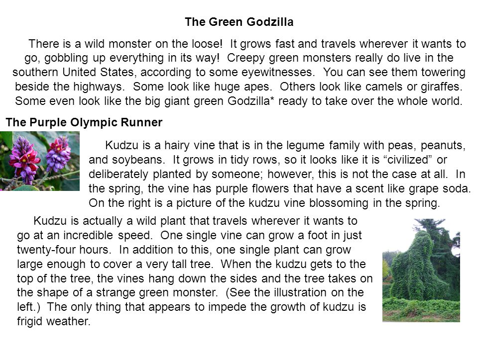 The Green Godzilla There is a wild monster on the loose.