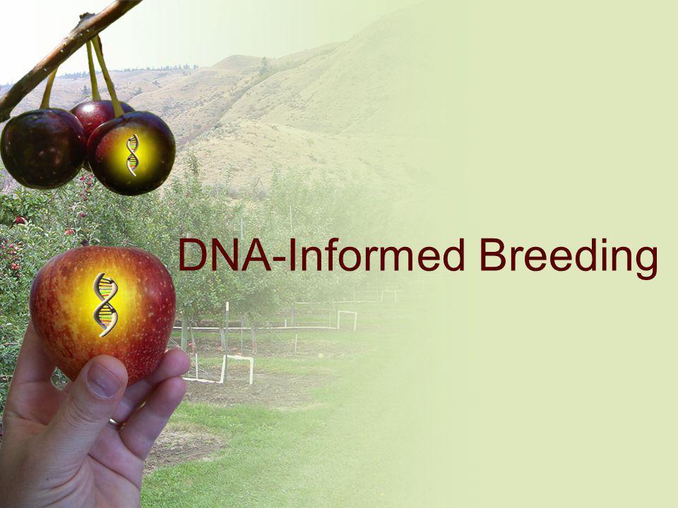 DNA-Informed Breeding