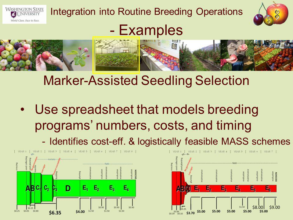 Integration into Routine Breeding Operations - Examples Use spreadsheet that models breeding programs' numbers, costs, and timing -Identifies cost-eff.