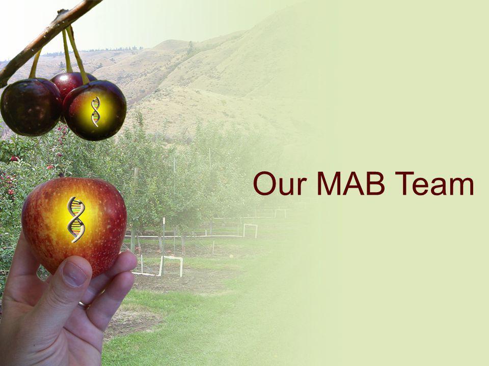 Our MAB Team