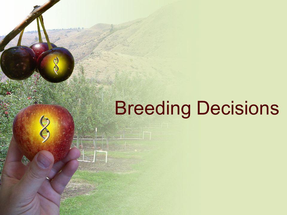Breeding Decisions