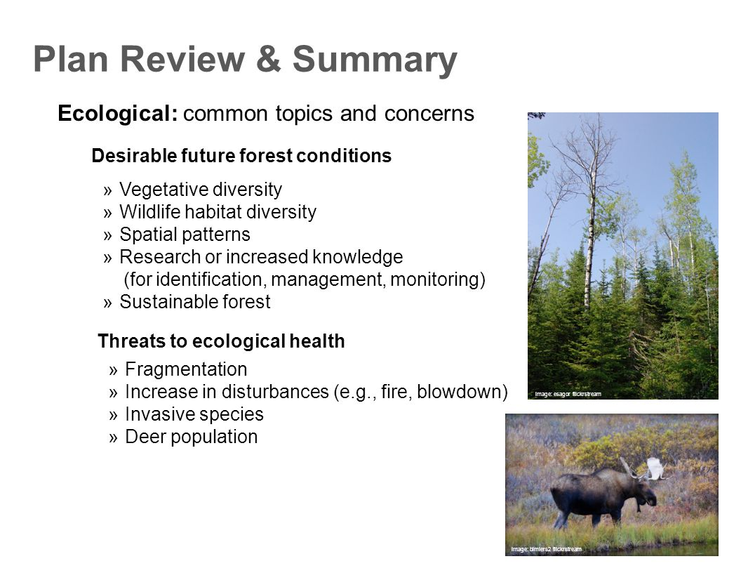 Ecological: common topics and concerns Plan Review & Summary  Vegetative diversity  Wildlife habitat diversity  Spatial patterns  Research or increased knowledge (for identification, management, monitoring)  Sustainable forest Desirable future forest conditions  Fragmentation  Increase in disturbances (e.g., fire, blowdown)  Invasive species  Deer population Threats to ecological health image: bimiers2 flickrstream image: esagor flickrstream