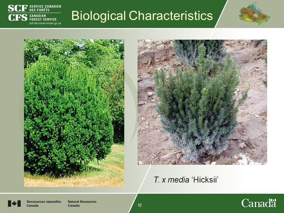 12 Biological Characteristics T. x media 'Hicksii'