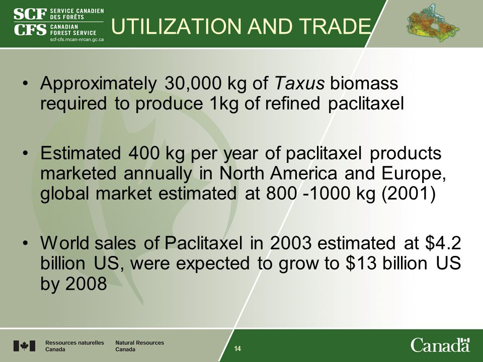 14 UTILIZATION AND TRADE Approximately 30,000 kg of Taxus biomass required to produce 1kg of refined paclitaxel Estimated 400 kg per year of paclitaxel products marketed annually in North America and Europe, global market estimated at 800 -1000 kg (2001) World sales of Paclitaxel in 2003 estimated at $4.2 billion US, were expected to grow to $13 billion US by 2008