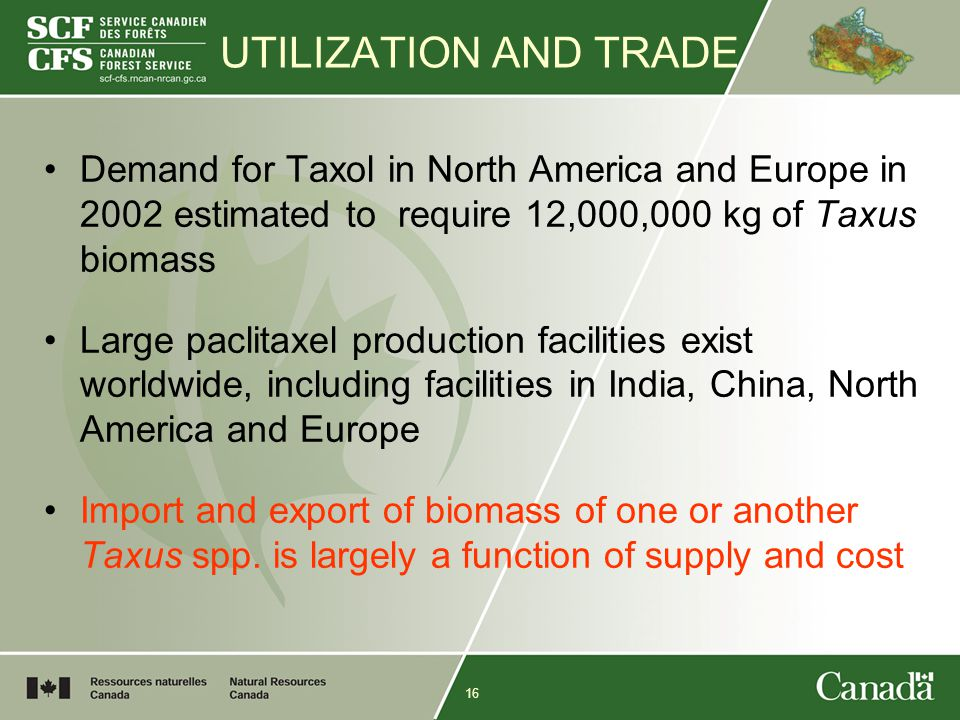 16 UTILIZATION AND TRADE Demand for Taxol in North America and Europe in 2002 estimated to require 12,000,000 kg of Taxus biomass Large paclitaxel production facilities exist worldwide, including facilities in India, China, North America and Europe Import and export of biomass of one or another Taxus spp.