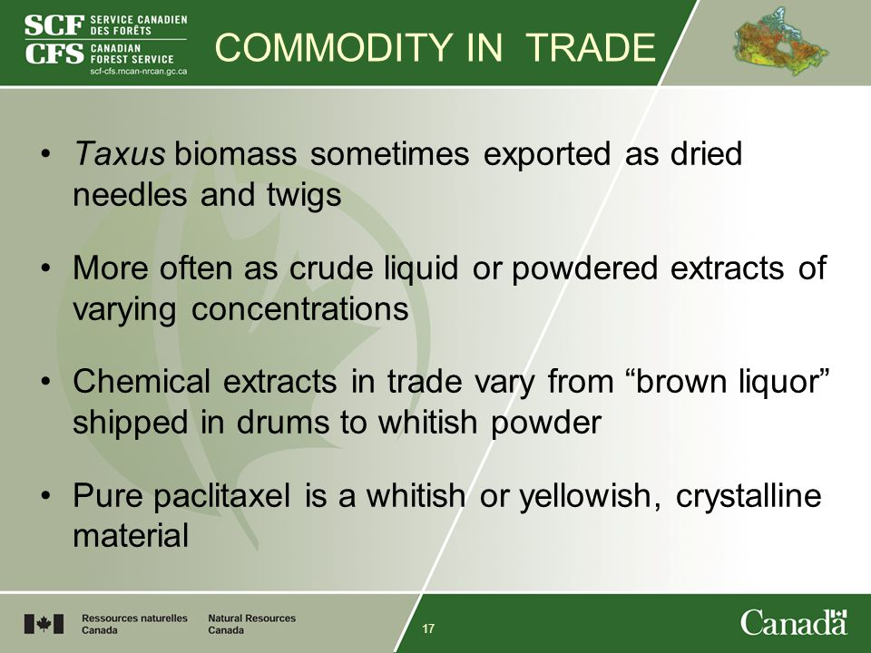 17 COMMODITY IN TRADE Taxus biomass sometimes exported as dried needles and twigs More often as crude liquid or powdered extracts of varying concentrations Chemical extracts in trade vary from brown liquor shipped in drums to whitish powder Pure paclitaxel is a whitish or yellowish, crystalline material