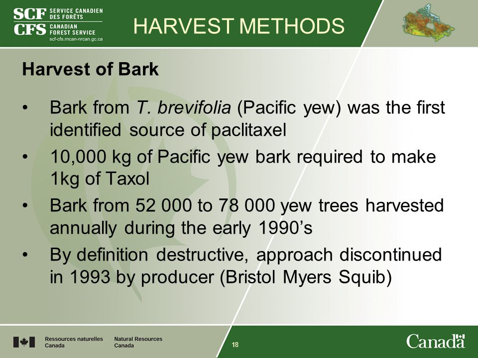 18 HARVEST METHODS Harvest of Bark Bark from T. brevifolia (Pacific yew) was the first identified source of paclitaxel 10,000 kg of Pacific yew bark r