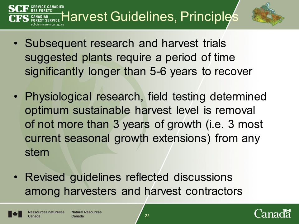 27 Harvest Guidelines, Principles Subsequent research and harvest trials suggested plants require a period of time significantly longer than 5-6 years to recover Physiological research, field testing determined optimum sustainable harvest level is removal of not more than 3 years of growth (i.e.